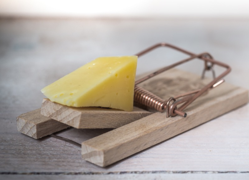 cheese on a mouse trap